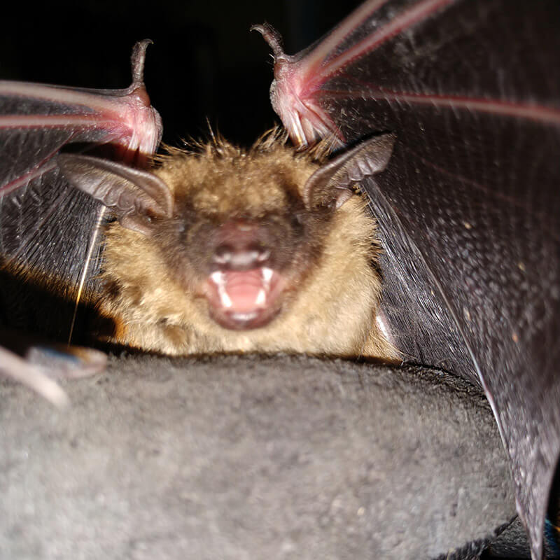 Another bat removed from business.