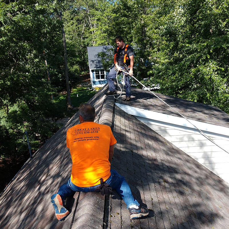 Bat exclusion after bat removal in Muskegon County